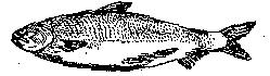 salmon-b&w